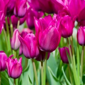 Multi Flowering