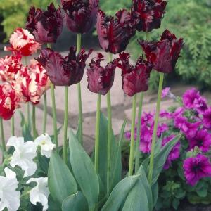 Strong Love De Vroomen Garden Products Landscape
