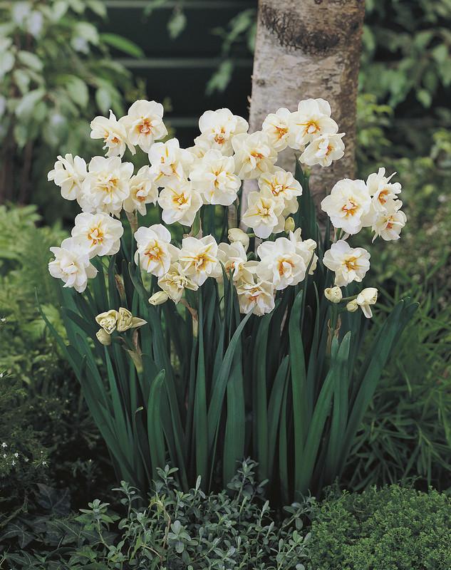Sir Winston Churchill De Vroomen Garden Products Landscape